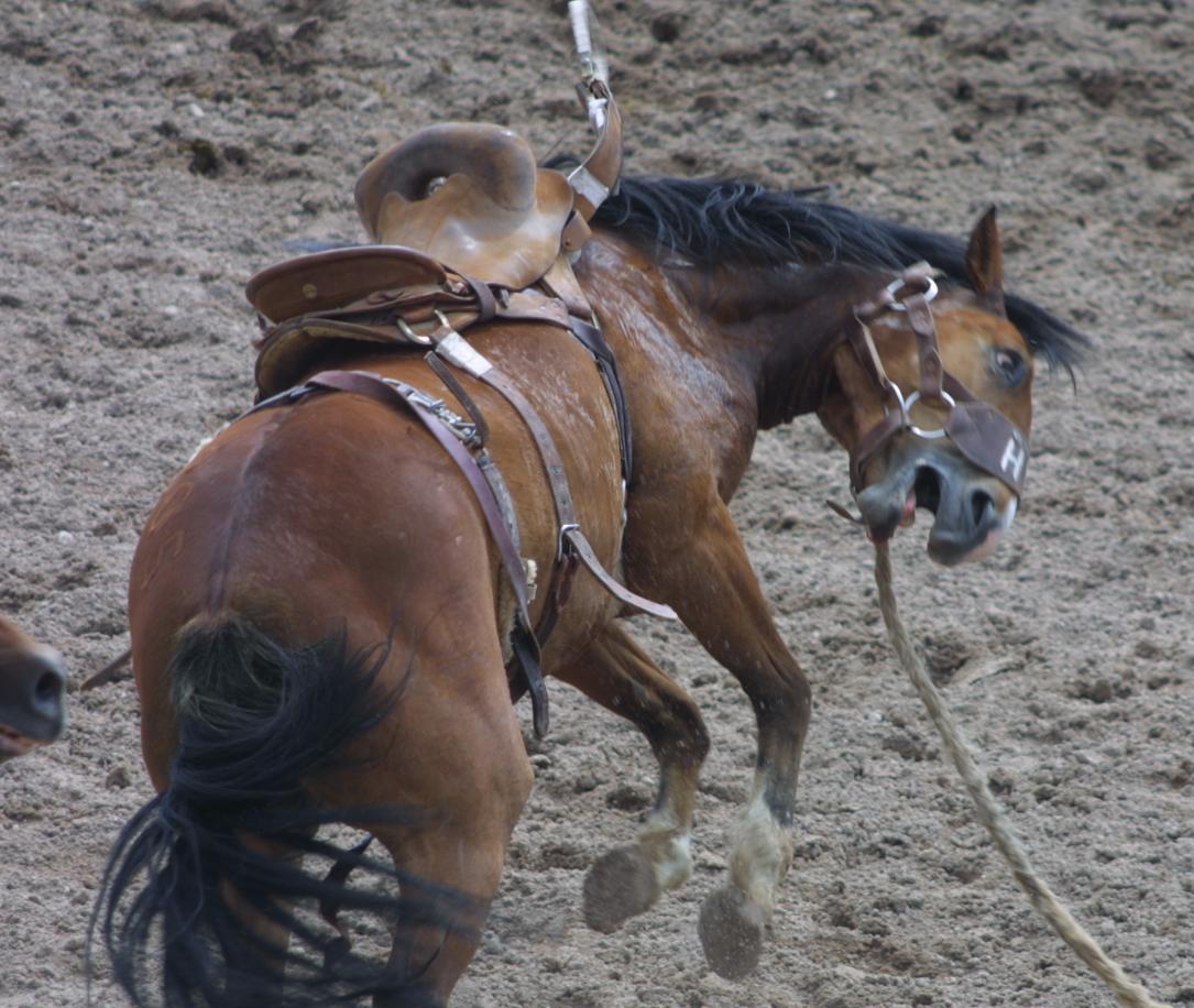 2005 Cheyenne Frontier Days Rodeo