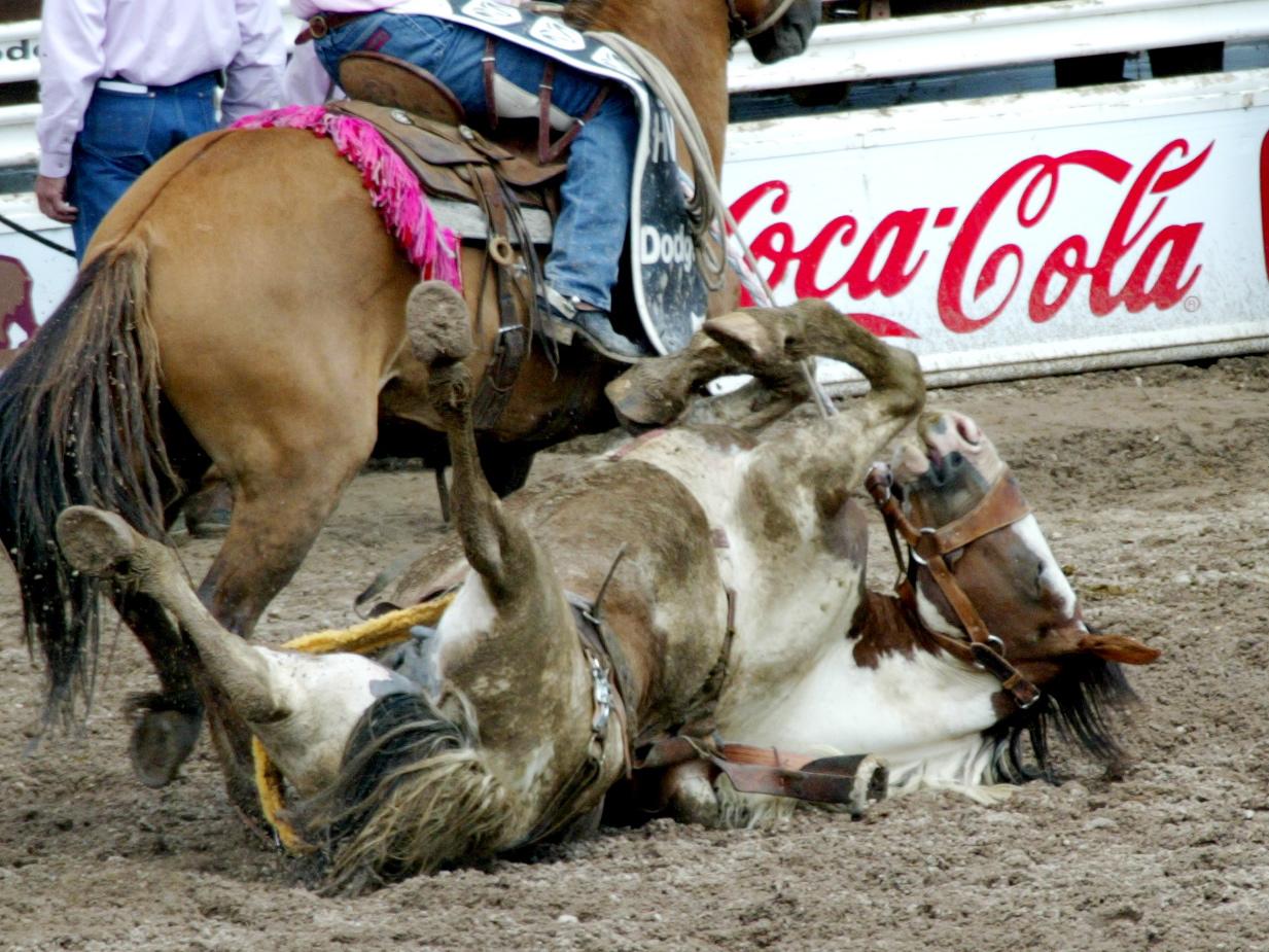 coke cruelty